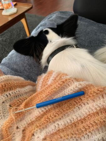 Belle's dog rests on the couch under her latest crochet creation.